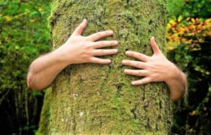 Heal Yourself By Embracing The Trees